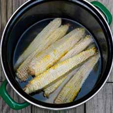 Corn Cob Stock