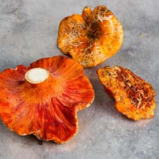 Lobster Mushrooms