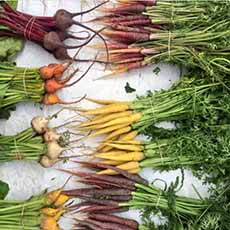 Colored Carrots & Beets