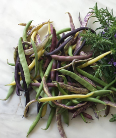 Multicolored Green Beans